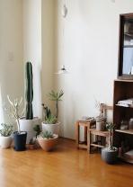 cactus-na-decoracao-14