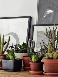 cactus-na-decoracao-5