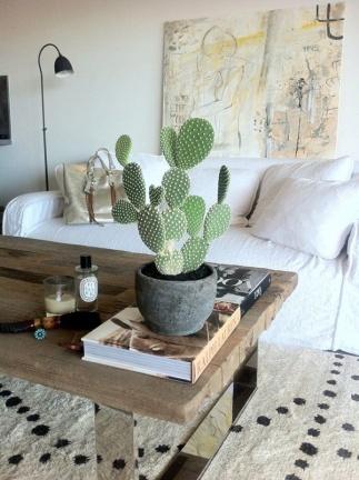 cactus-na-decoracao-8