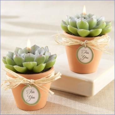 succulent-candles