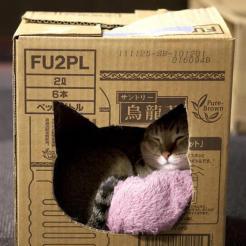 cama para gatos arquitrecos