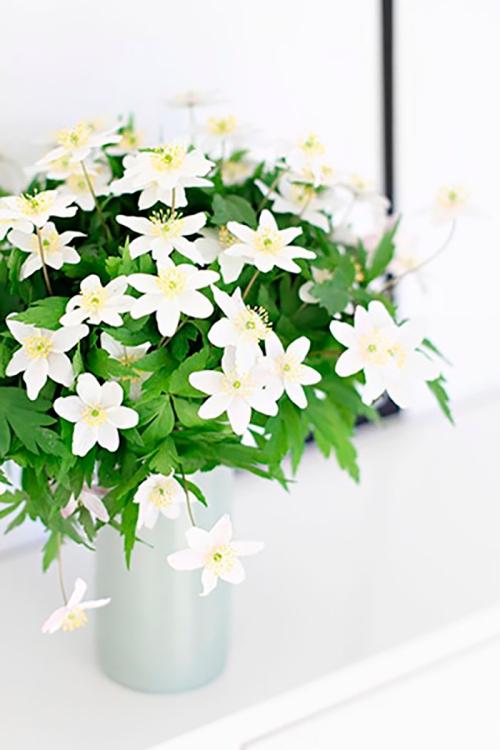 Resultado de imagem para Decoração com jasmim planta
